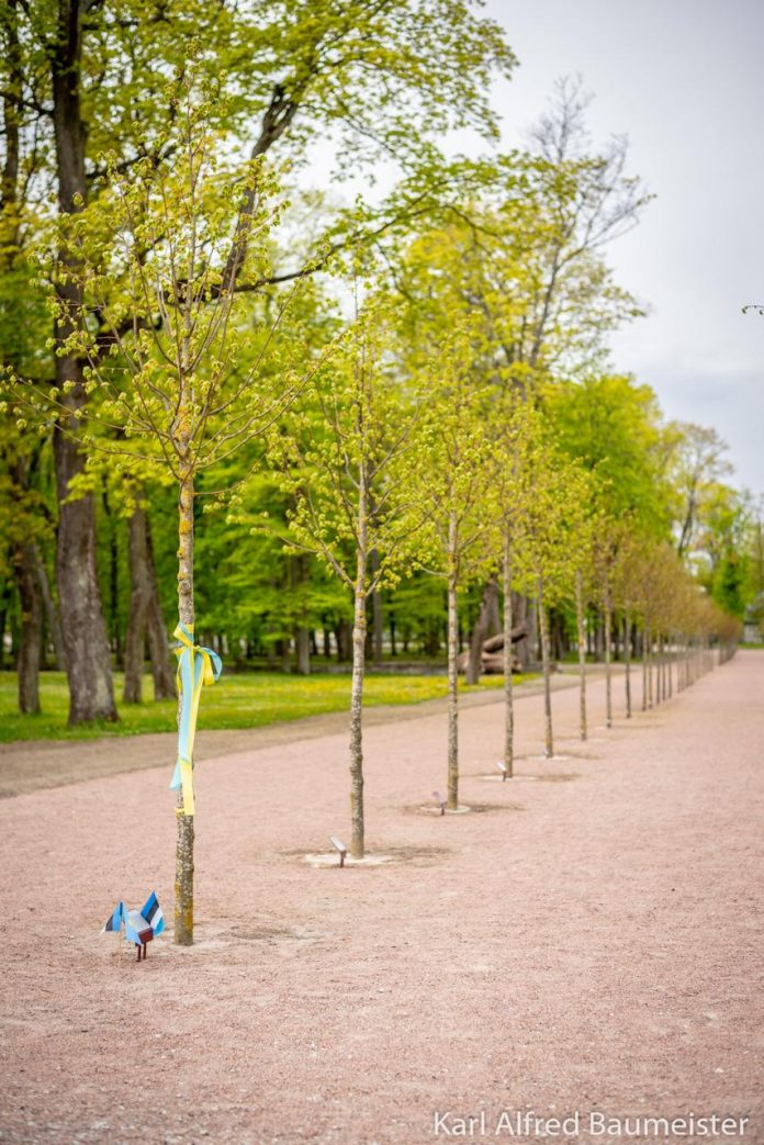 A tree named Dimash in Estonia